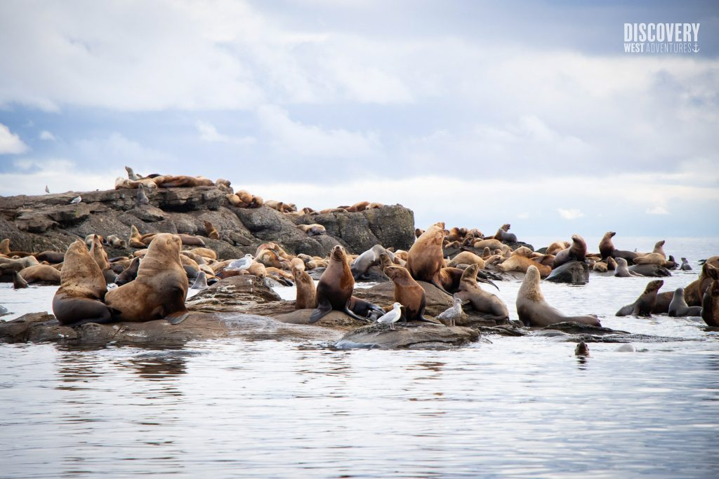 Sea Lion Colony