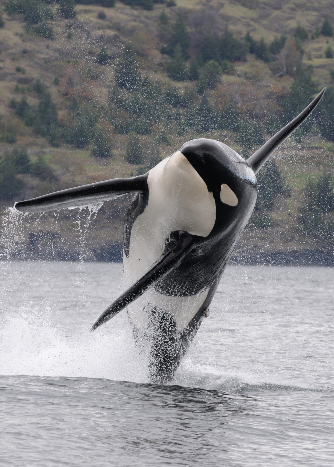 Whale Watching Tour In Campbell River